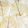 Stock Photo: Transparent leaves