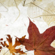 Autumnal background — Foto de Stock