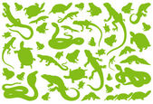 Amphibian reptile environmental vector — Stock Vector