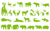 Africa animals illustration collection background vector set — Stock Vector