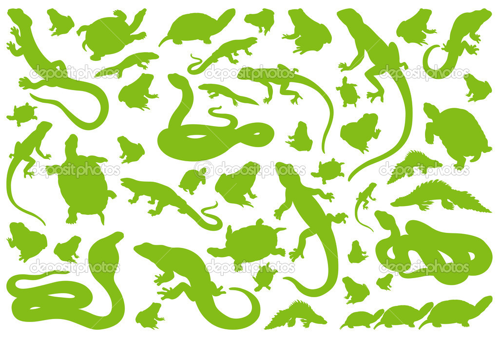 Amphibian reptile environmental illustration collection background vector — Stock Vector #11461801