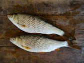 Fish rudd on board — Stock Photo