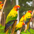 Stock Photo: Parrots are seatting on the branch