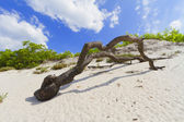 Dry tree branch on a sand dune — Stock Photo