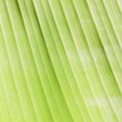 Banana leaf. — Stock Photo