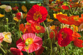 Beautiful flowers — Stockfoto