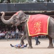 The famous elephant show in Nong Nooch tropical garden on December 4, 2011 in Pattaya, Thailand - Stock Photo