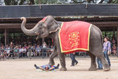 The famous elephant show in Nong Nooch tropical garden on December 4, 2011 in Pattaya, Thailand — Stock Photo