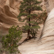 Hike through Tent Rocks National Monument — Stock Photo #11869713