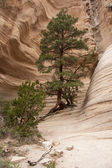Hike through Tent Rocks National Monument — Stock Photo