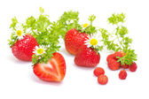 Strawberry fruits with flowers and leaves on white background — Stock Photo