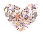 Coeur coquillage blanc — Photo