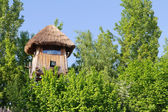 Guard House in tree — Stock Photo