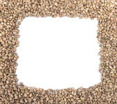 Hemp seeds frame — Stock Photo