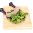 Cutting fresh cilantro — Stock Photo