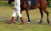Polocrosse player with horse — Stock Photo