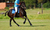 Polocrosse player riding on horse — Stock Photo