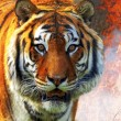 Stock Photo: Tiger Panthertigris altaica