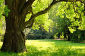 Mighty oak tree — Stockfoto
