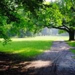 Park on rainy day — Stock Photo #11483076