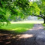 Park on rainy day — Stock Photo #11483077