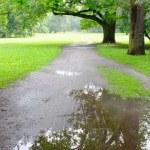 Park on rainy day — Stock Photo #11505116