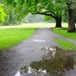 Park on rainy day — Stock Photo