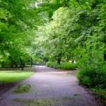Park on rainy day — Stock Photo #11505127
