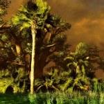 Wetland - swamp — Stock Photo