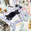 Stock Photo: Feline composition made of postage stamps
