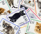 Feline composition made of postage stamps — Stock Photo