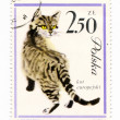 Europecat on vintage, canceled post stamp from Poland — Stock Photo #12196280