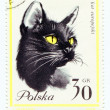 European cat on a vintage, canceled post stamp from Poland — Stock Photo