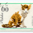 Stock Photo: European cat on a vintage, canceled post stamp from Poland