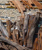 Steel rods or bars used to reinforce concrete. — Stock Photo