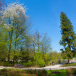 Park in spring time — Stock Photo