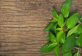 Closeup of fresh mint — Stockfoto