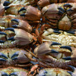 Crabs on a market — Stock Photo