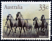 AUSTRALIA - CIRCA 1986: A stamp printed in australia shows Brumbies, circa 1986 — Stock Photo