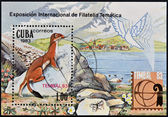 CUBA - CIRCA 1983: A stamp printed in Cuba shows Mustela nivalis (International Philatelic Exhibition Tembal 83), circa 1983 — 图库照片