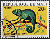 MALI - CIRCA 1976: stamp printed in Mali shows Chameleon, circa 1976 — Stock Photo