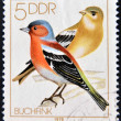 Stock Photo: GERMANY - CIRCA 1978: stamp printed in Germany shows Song Birds, Chaffinches, circa 1978.