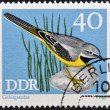 GERMANY - CIRCA 1973: A stamp printed in Germany dedicated to birds, shows grey wagtail (motacilla cinerea), circa 1973 — Stock Photo
