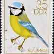 Stock Photo: GERMANY- CIRCA 1979: stamp printed in Germany, shows Song Birds, bluetit, circa 1979.