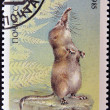 UNION OF SOVIET SOCIALIST REPUBLICS - CIRC1985: stamp printed in USSR shows Pamir shrew (Sorex bucharensis), from endangered wildlife series, circ1985 — Stock Photo #11015986