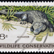 UNITED STATES OF AMERICA - CIRCA 1971: A stamp printed in USA dedicated to wildlife conservation, shows alligator, circa 1971 — Stock Photo