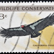 UNITED STATES OF AMERICA - CIRCA 1971: A stamp printed in USA dedicated to wildlife conservation, shows california condor, circa 1971 — Stock Photo