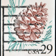 UNITED STATES OF AMERICA - CIRCA 1980: A stamp printed in USA shows pine bump, circa 1980 — Photo