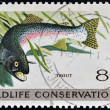 UNITED STATES OF AMERICA - CIRCA 1971: A stamp printed in USA dedicated to wildlife conservation, shows trout, circa 1971 — Stock Photo