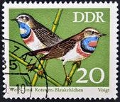 GERMANY - CIRCA 1973: A stamp printed in Germany dedicated to birds, shows bluethroat (luscinia svecica), circa 1973 — Stock Photo